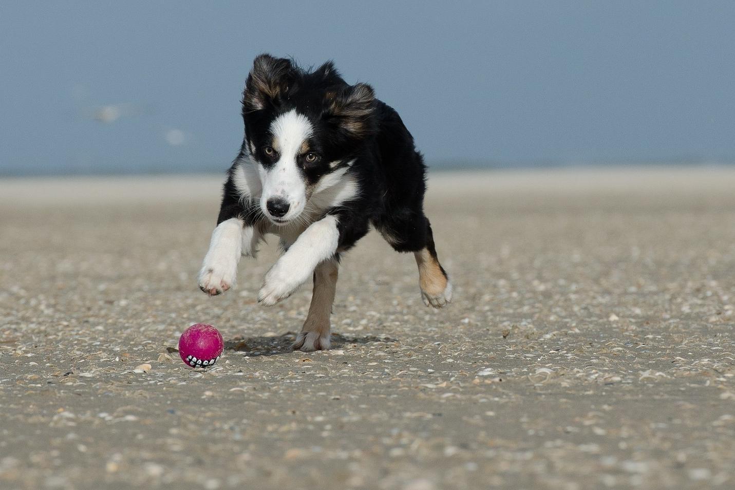 Hund am Strand mit Ball