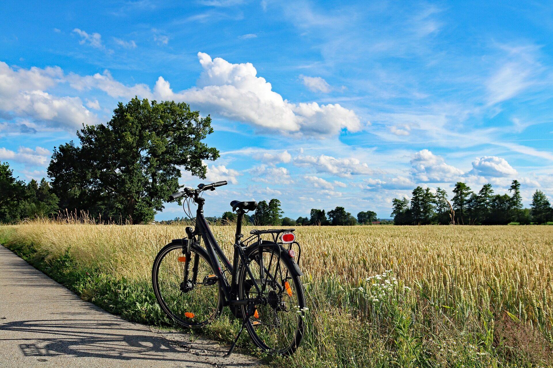 Fahrrad vor Kornfeld