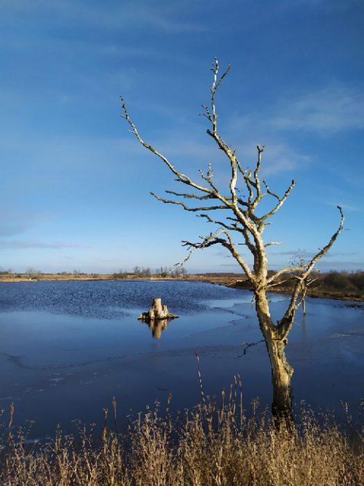 Toter Baum im Winter im Noor auf der Geltinger Birk